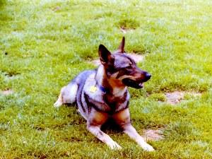 Alexis 1999